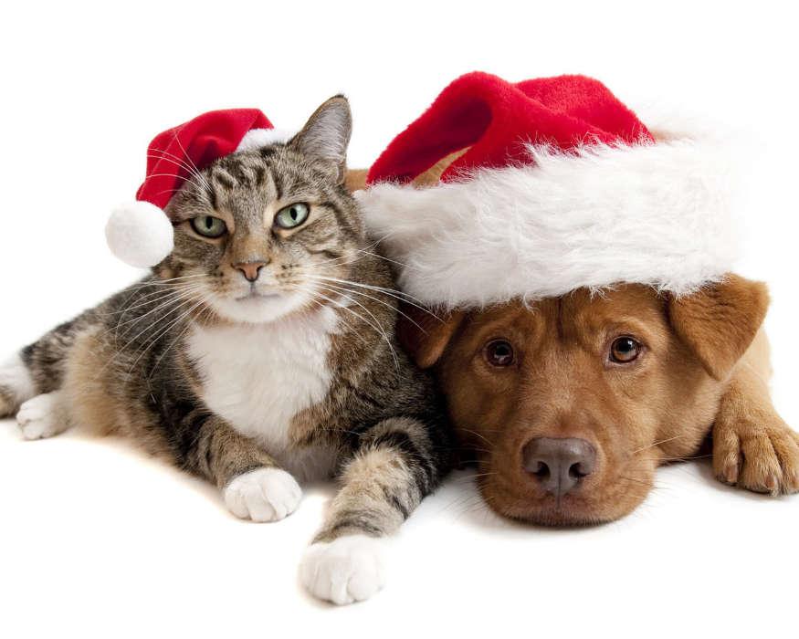 Нарядные кошка и собака
