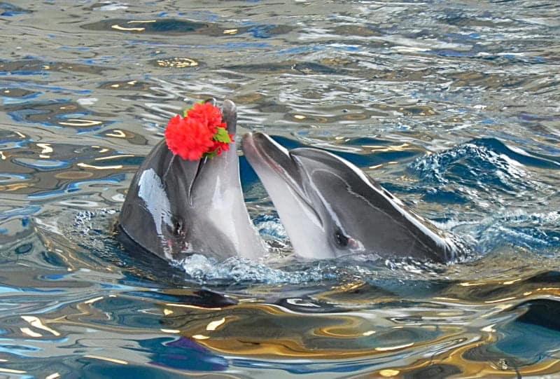 Дельфины с цветочком