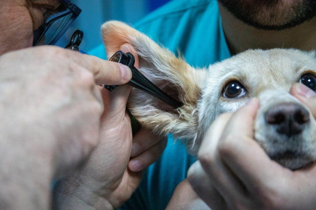 Миниатюризация как тенденция в ветеринарной функциональной диагностике